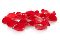 Rose petals. Red rose petals isolated on white, outline clipping path included Stock Photos