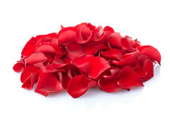 Rose petals. Red rose petals heap isolated on white, outline clipping path included Royalty Free Stock Image