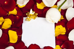 Rose petals. Message and many rose petals royalty free stock photo