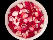 Rose Petals. Pink and red rose petal background represent peace, love and relaxation stock photography