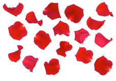 Rose Petals. Red Rose petals isolated on white background stock photography