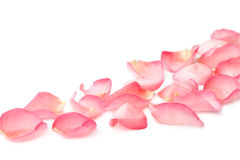 Rose petals. Pink rose petals on white background Royalty Free Stock Image