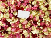 Rose petals. Blank white card with copyspace on top of multicolored rose petals Royalty Free Stock Photography