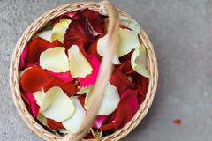 Rose petals royaltyfri fotografi