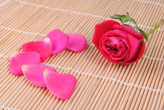 Rose and petals Stock Image