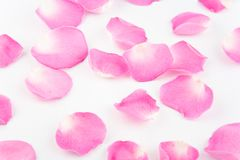 Rose Petals Stock Photography