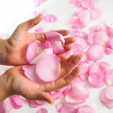 Rose petals. Hand holding pink rose petals oer white surface royalty free stock photos