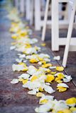 Rose Petals. Close Up of Rose Petals Scattered on the Aisle for a Wedding Stock Photos