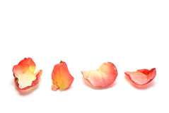 Rose petals. Four red and yellow rose petals on white background royalty free stock image
