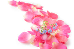 Rose Petals. And forget me not flower stock images