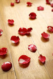 Rose petals. A background image of rose petals on the floor royalty free stock images