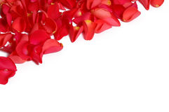 Rose petals. Few red rose petals on white background stock image