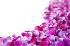 Rose petals. Place like curve giving lots of copy space stock photography