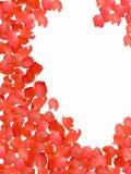 Rose-petals Royalty Free Stock Photo