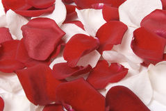 Rose-petals Royalty Free Stock Photography