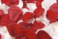 Rose-petals Royalty Free Stock Photography