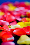 Rose petals. A lot of rose petals in the textile fabric royalty free stock photos