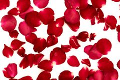 Rose petals arranged in a pattern. On a white background stock photo