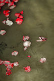 Rose Petals Ashes Lake Water Photo stock
