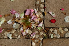 Rose petals and an autumn leaf Stock Photo