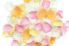 Rose petals background. Abstract background of fresh scattered rose petals royalty free stock image