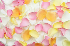Rose petals background Royalty Free Stock Photo