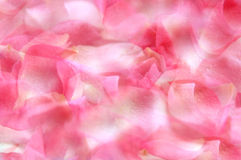 Rose Petals background Stock Images