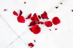 Rose petals Stock Images