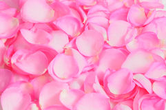 Rose petals background. Detail of pink rose petals texture forming an uniform background royalty free stock photo