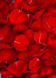 Rose Petals Background. Beautiful Red Rose Petals Background Texture Vertical stock photos