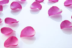 Rose Petals Background. A background of pink rose petals on white plexiglass. Can be paired with image no. 30678383 royalty free stock image