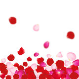 Rose petals background. For presentations, invitation ad print. Wedding valentine love concept Royalty Free Stock Photo
