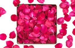 Rose Petals background. Red rose petals background texture stock photos