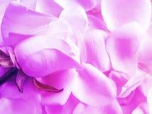 Rose petals textured, elegant creative seasons, celebration vintage background royalty free stock photography