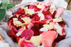 Rose petals basket Royalty Free Stock Images