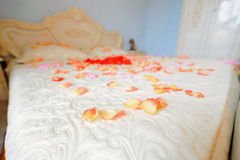 Rose Petals on Bed Royalty Free Stock Images