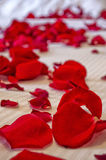 Rose Petals on Bed. Macro shot of Rose petals laying on a duvet Royalty Free Stock Photography