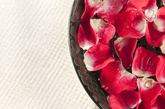 Rose Petals in Black Bowl Royalty Free Stock Photography