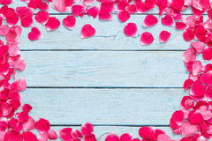 Rose petals on  blue background Royalty Free Stock Image