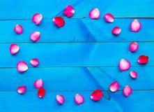 Rose petals on blue wooden. Background stock image