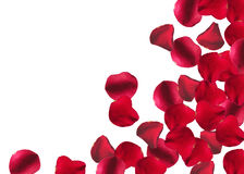 Rose Petals Border. Red Rose Petals Border on white background stock photos