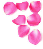 Rose Petals Border Royalty Free Stock Photos