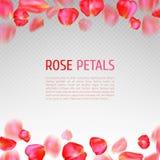 Rose petals border. Falling red rose petals border on transparent background. Realistic vector illustration. Wedding invitation or greeting card template Stock Image