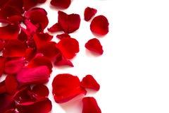 Rose Petals Border Royalty Free Stock Photos