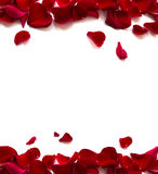 Rose Petals Border. Isolated on white background stock photography
