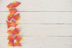 Rose petals border on white wood Stock Images