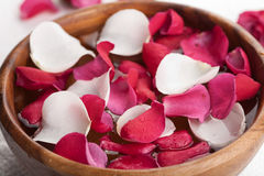 Rose petals in bowl Stock Images