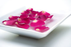 Rose Petals in Bowl Stock Photography