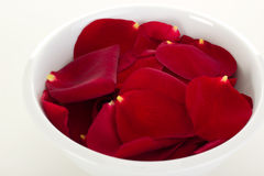 Rose petals in a bowl Royalty Free Stock Photo