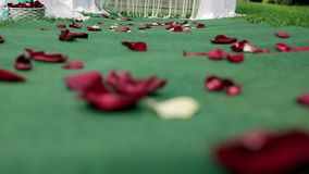 Rose petals on the Bridal path stock video
